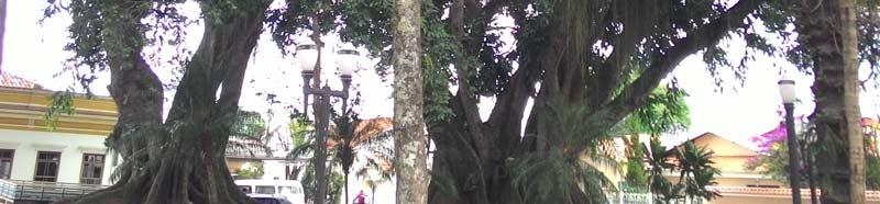Árvore antiga - busca de termos antigos com o Wiki-acupuntura.