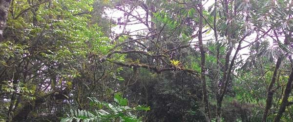 As florestas são fonte rica em plantas para a saúde, inclusive fitoterapia chinesa