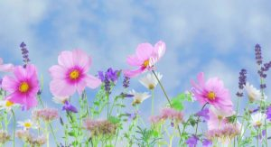 dra Lilian e flores